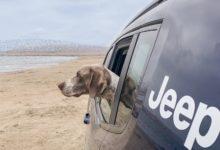 """Photo of """"Perros Off Road"""" , nueva campaña de Jeep Perú"""